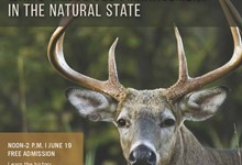 White-Tailed Deer Management in The Natural State